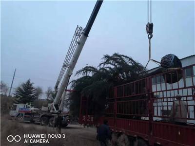 黄山市海洋吊装公司